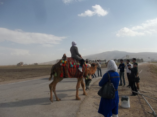 Kamel 1