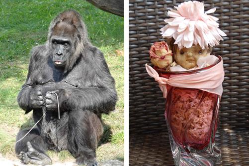 olga-gorilla