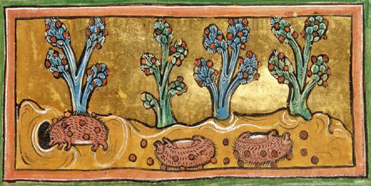 a Bestiary, England 13th century (British Library, Royal 12 F XIII, fol. 45r) hibernating hedgehogs