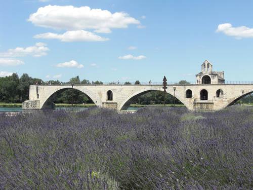 lavendaavignon