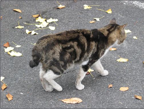 Nikko kot zywy