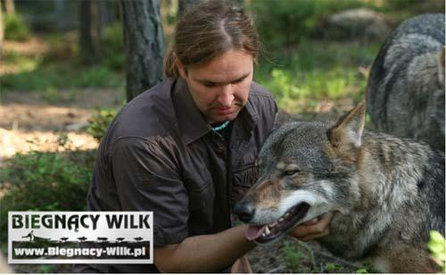 wilk2