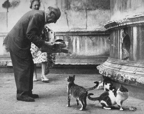strawinski i koty w Wenecji