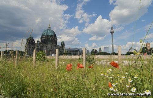 berlin-wiese-schlossplatz-mitte