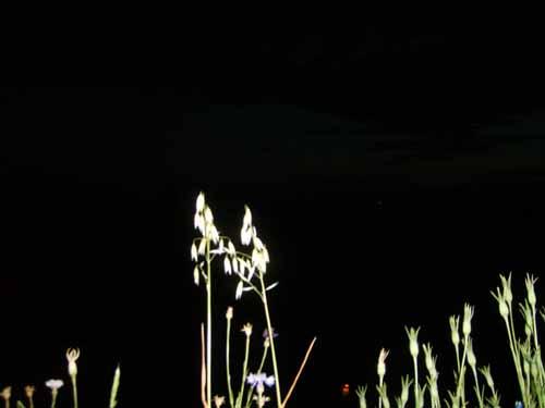 nachtaufdembalkon