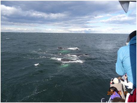 ameryka-wieloryby