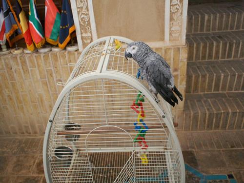 Jazd-papuga