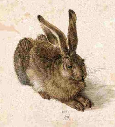 1 Zajac