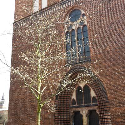 wiosna przed katedra klein