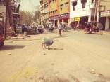 Indie-Niedziela (37)